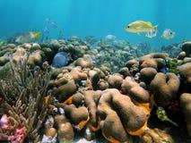 Vida tropical subaquática imagens de stock royalty free