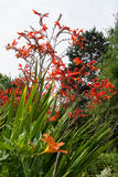 Vida vegetal 109 Imagen de archivo libre de regalías