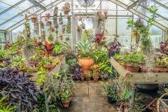 Vida vegetal de invernadero Imagen de archivo