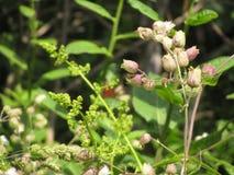 Vida vegetal del verano Imágenes de archivo libres de regalías