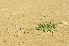 Vida vegetal en tierra seca Fotos de archivo libres de regalías