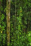 A vida vegetal luxúria, tropical cerca a fuga de caminhada a da floresta úmida imagens de stock royalty free