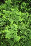 A vida vegetal luxúria, tropical cerca a fuga de caminhada da floresta úmida na reserva biológica de Trimbina imagem de stock royalty free