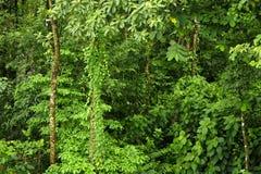 A vida vegetal luxúria, tropical cerca a fuga de caminhada da floresta úmida na reserva biológica de Trimbina foto de stock