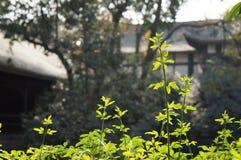 Vida verde Imagen de archivo