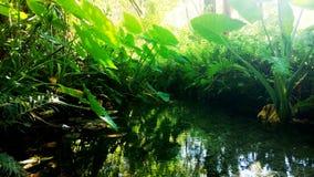 Vida verde imagen de archivo libre de regalías