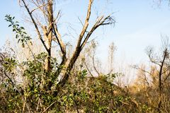 Vida verde entre los árboles muertos Imagen de archivo