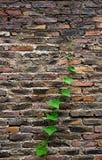 Vida verde no tijolo foto de stock royalty free