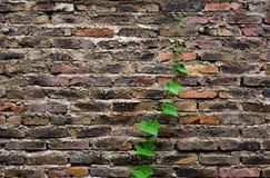 Vida verde no tijolo foto de stock
