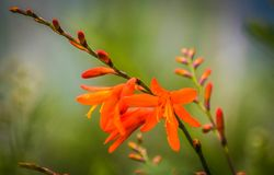 Vida viva na flor completa imagem de stock
