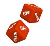 Vida y muerte Foto de archivo libre de regalías