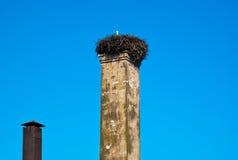 Vidas da cegonha no telhado Imagens de Stock Royalty Free