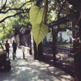 Vidas de hojas Fotos de archivo libres de regalías