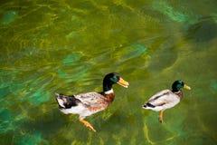 Vidas dos pássaros Imagens de Stock Royalty Free