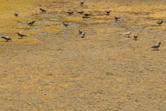 Vidas dos pássaros Fotografia de Stock Royalty Free