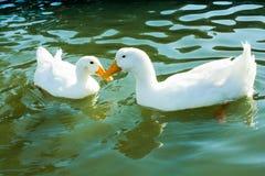 Vidas dos pássaros Imagem de Stock