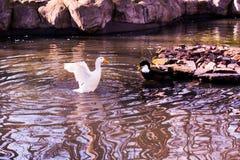 Vidas dos pássaros Foto de Stock Royalty Free