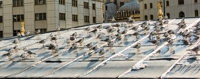 Vidas dos pássaros Imagem de Stock Royalty Free