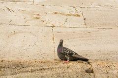 Vidas sós do pássaro Imagens de Stock