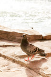 Vidas sós do pássaro Fotografia de Stock Royalty Free