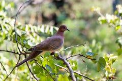 Vidas sós do pássaro Imagem de Stock Royalty Free