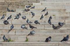 Vidas sós do pássaro em urbano fotografia de stock royalty free
