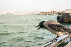 Vidas sós do pássaro na cidade imagens de stock royalty free