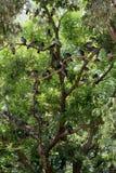 Vidas sós do pássaro no ambiente natural Fotos de Stock Royalty Free