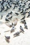 Vidas sós do pássaro no ambiente natural Imagem de Stock