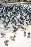 Vidas sós do pássaro no ambiente natural Fotografia de Stock Royalty Free