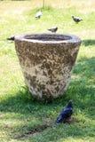 Vidas sós do pássaro no ambiente natural Imagem de Stock Royalty Free