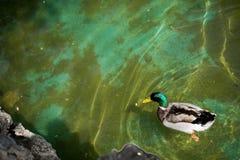 Vidas sós do pássaro no ambiente natural Fotografia de Stock