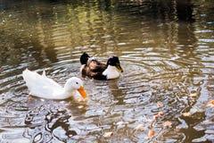 Vidas sós do pássaro no ambiente natural Fotos de Stock