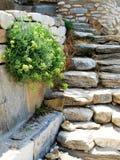Vidas vegetais completas as pedras Imagem de Stock