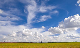 Vidd av himmel över fält av skörden Royaltyfria Foton