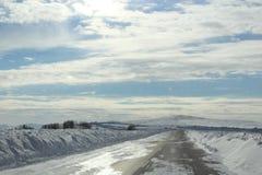 Vidder av Altai Royaltyfria Bilder