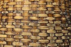 Vide- bambumodellbakgrund Royaltyfri Bild