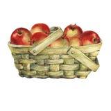 Vide- korg av fanér som fylls med nya röda äpplen Royaltyfri Foto
