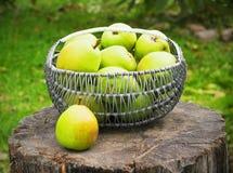 Vide- korg av mogna päron utomhus Arkivfoton