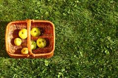 Vide- korg med äpplen Royaltyfria Bilder