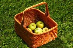Vide- korg med äpplen Fotografering för Bildbyråer