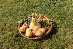 Vide- magasin med frukt Royaltyfri Foto