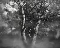 Vide på floden Royaltyfri Foto