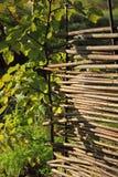 Vide- staket i trädgården Royaltyfri Bild