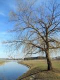 Vide vid sjön Royaltyfria Bilder