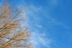 Videfilialer utan sidor på bakgrunden för molnig himmel med den lilla månen royaltyfri fotografi