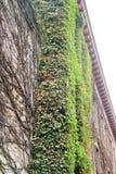 A videira cobriu a construção de tijolo Foto de Stock Royalty Free