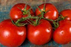 Videira com os tomates maduros vermelhos da estufa holandesa Imagens de Stock