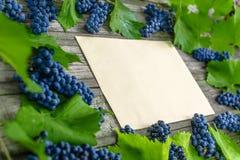 Videira com uvas e as folhas azuis ao redor na tabela de madeira rústica do vintage Molde de papel velho no centro fotos de stock