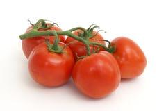 Videira do tomate Foto de Stock Royalty Free